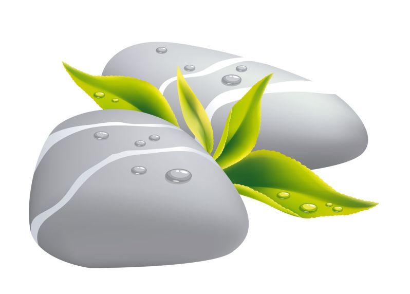 11599437 - two grey pebbles with fresh leaf. vector illustration.